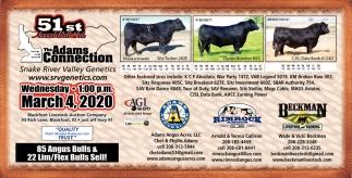 51st Annual Bull Sale